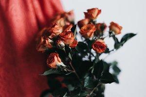 Tangerine Rose Styled Stock 097