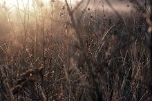 Dry grass in the field at dawn by  in Nature