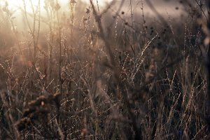 Dry grass in the field at dawn