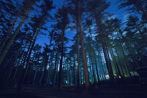 Night Sky Through the Pines