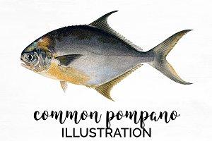 common pompano