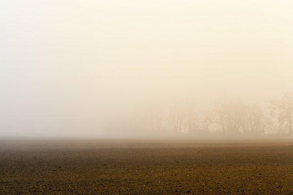 Stock Photos: rsooll - Fog Trees