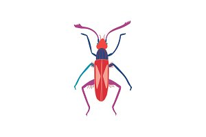Cute Colorful Beetle Insect, Top
