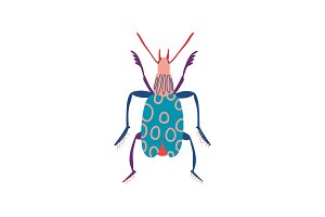 Colorful Insect, Cute Beetle Top