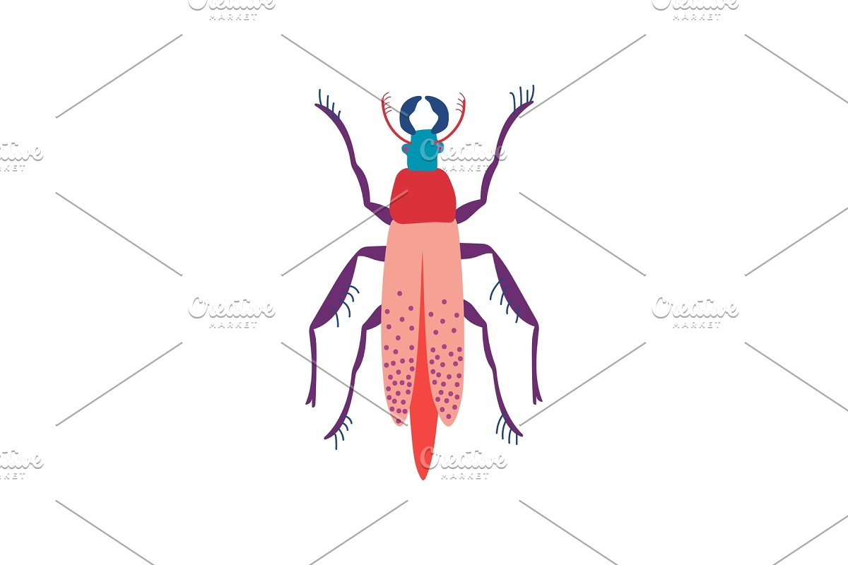 save  beetle insect