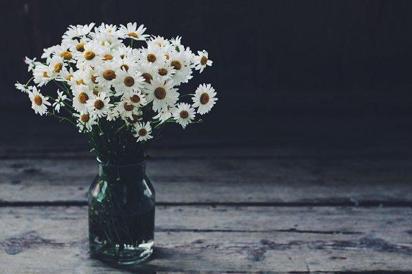 Stock Photos - Bunch of daisy