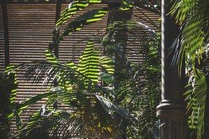 Plants inside the Umbracle II