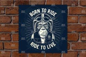 Monkey in motorcycle helmet