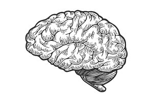 Human brain sketch engraving vector