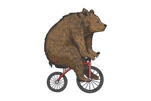 Bear on bicycle sketch engraving