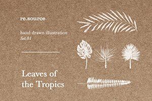 Tropical Leaves Illustrations