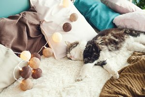 the cat sleeps sweetly on the bed