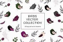 Birds vector collection