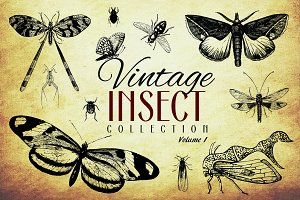 200 Vintage Insect Vector Graphics