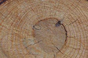 Wooden log.jpg