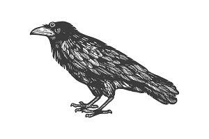 Crow with three eyes engraving