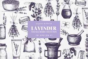 Hand Drawn Lavender Illustrations