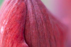 Beautiful closeup of a rose
