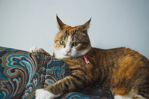 Funny Ginger Cat with Harismatic