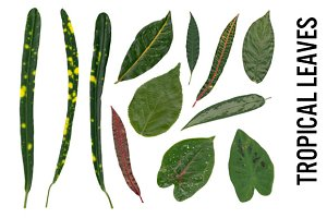 Tropical Leaves - Hi Res PNG, Trans