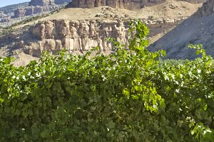 Wine Industry in Colorado