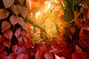 Tropical forest with plants. Nature