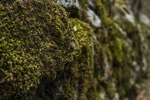 Moss in Yosemite