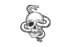 Snake in human skull sketch vector