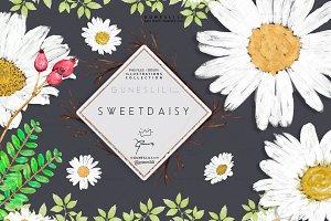 Daisy Flowers Clipart acrylic paint