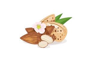 Almond nut kernels