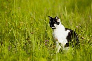 Cat black and white.