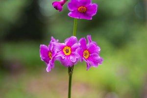 Pink flower in the botanic garden