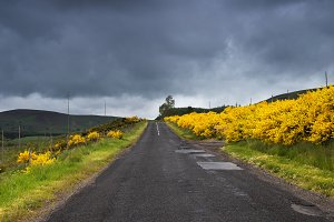 Rural road surrounded by flowers