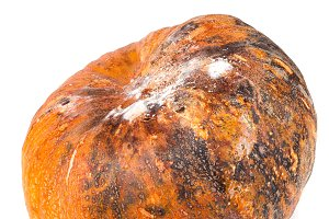 pumpkin with mold isolated on white