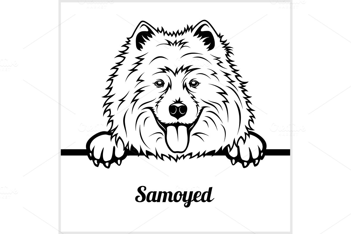 Samoyed Peeking Dogs Breed Illustrations Creative Market