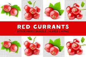 Isolated red currants collection