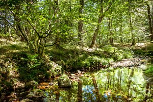 Forest, river and reflections