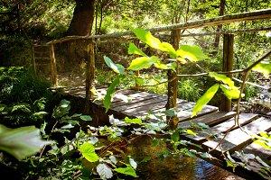 Wooden footbridge over a stream