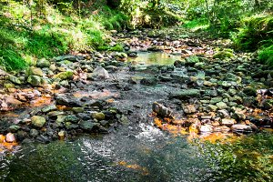 Pebbles and stream through a forest