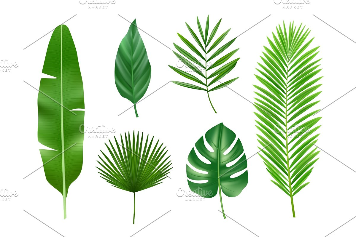Tropical Plants Exotic Eco Nature Custom Designed Graphics