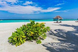 Maldivian beach and blue ocean.