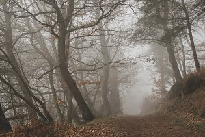 Misty and Moody Forest Path