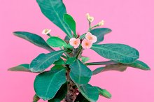 Plants on pink minimal fashion desig by  in Beauty & Fashion