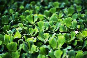 Sea of Greens