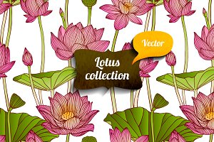 Lotus vector collection