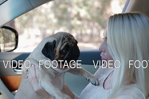 Pug sitting on the woman's hands in