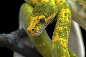 Snake isolated on black
