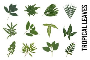 Tropical Leaves and Palms Clipart