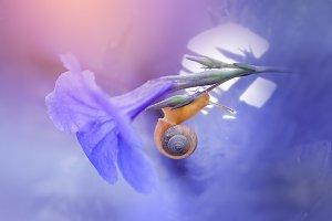 Snail On Flower