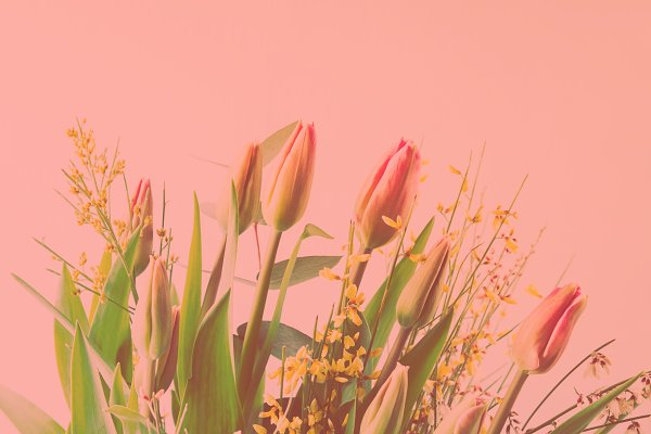 Holiday Stock Photos: Life Morning Photography - Beautiful bunch of tulips on pastel